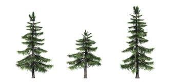 Metta degli alberi di cedro dell'Alaska illustrazione vettoriale