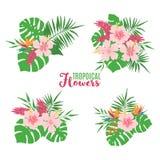 Metta dei mazzi tropicali dell'estate isolati su bianco illustrazione di stock