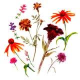 Metta dei wildflowers e delle piante isolati dell'acquerello illustrazione vettoriale