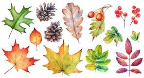 Metta delle foglie, delle bacche e delle pigne di autunno su fondo bianco fotografia stock libera da diritti