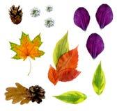 Metta delle foglie di autunno, dei fiori e dei petali tagliati, vista superiore, su un fondo bianco, con i percorsi fotografia stock libera da diritti
