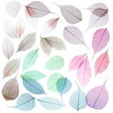 Metta delle foglie di scheletro decorative su fondo bianco immagini stock libere da diritti