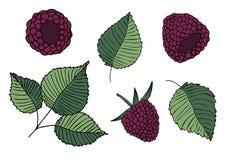Metta delle illustrazioni delle more e delle foglie illustrazione di stock