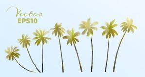 Metta delle palme dell'acquerello Pianta della noce di cocco isolata Illustrazione di vettore royalty illustrazione gratis