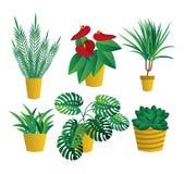 Metta delle piante d'appartamento della casa, raccolta delle piante in vaso su fondo bianco Progettazione piana Giardino illustrazione di stock