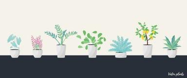 Metta delle piante in vaso Stile piano illustrazione vettoriale