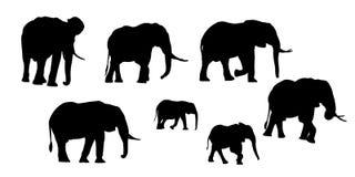 Metta delle siluette realistiche dell'adulto e di giovane elefante Isolato su fondo bianco, vettore royalty illustrazione gratis
