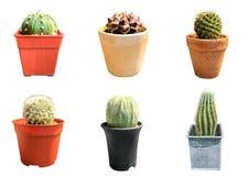 Metta di sei cactus isolati su fondo bianco con il percorso di ritaglio fotografia stock