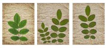 Metta di vario vecchio fondo d'annata del giornale con le piante asciutte immagini stock libere da diritti