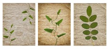 Metta di vario vecchio fondo d'annata del giornale con le piante asciutte fotografia stock