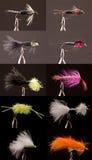 Metta e catturi le mosche Fotografia Stock Libera da Diritti
