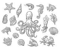 Metta gli animali di mare Shell, corallo, granchio, gamberetto, stella, pesce, polipo illustrazione di stock