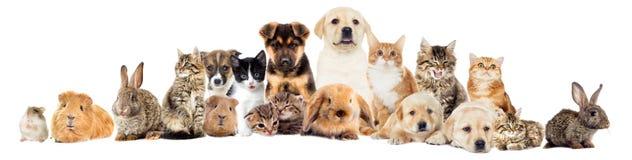 Metta gli animali domestici fotografie stock