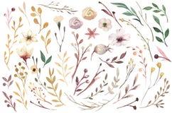 Metta gli elementi d'annata dell'acquerello dei fiori, giardino ed i fiori selvaggi, le foglie, rami fiorisce, illustrazione isol Fotografia Stock