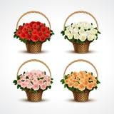 Metta i canestri delle rose isolati Fotografia Stock