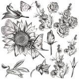 Metta i fiori disegnati a mano di vettore illustrazione di stock