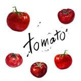 Metta i pomodori Verdure dell'acquerello isolate su fondo bianco Fotografia Stock Libera da Diritti
