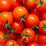 Metta il primo piano dei pomodori Fotografia Stock Libera da Diritti