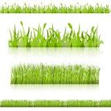 Metta l'erba. Vector l'immagine. Fotografia Stock