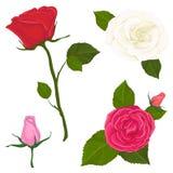 Metta l'illustrazione di vettore dei fiori è aumentato illustrazione di stock