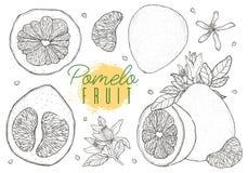 Metta la frutta disegnata a mano del pomelo di vettore Stile d'annata, contorno nero Immagine Stock Libera da Diritti