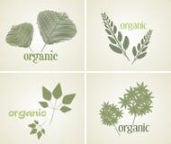 Metta la pianta organica di logo, vettore Immagini Stock Libere da Diritti