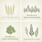 Metta la pianta organica di logo, vettore Fotografia Stock