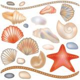 Metta le conchiglie e le stelle marine Immagini Stock