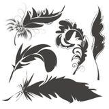 Metta le piume di uccello per disegnare Immagini Stock