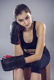 Metta in mostra i guantoni da pugile della giovane donna, fronte dello sho dello studio della ragazza di forma fisica Fotografia Stock Libera da Diritti