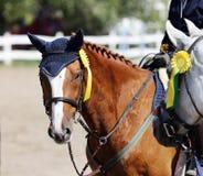 Metta in mostra il primo piano del ritratto della testa di cavallo sotto la sella durante il competitio fotografie stock libere da diritti