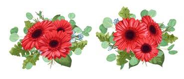 Metta un mazzo delle gerbere rosse, eucalyptus e la cera fiorisce il isolat Immagini Stock Libere da Diritti