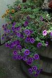Mettez en place avec des fleurs de ressort et d'été en serre chaude à la lumière du soleil Configuration florale Photos stock