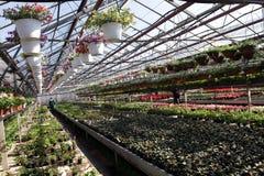 Mettez en place avec des fleurs de ressort et d'été en serre chaude à la lumière du soleil Configuration florale Images stock