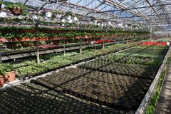 Mettez en place avec des fleurs de ressort et d'été en serre chaude à la lumière du soleil Configuration florale Photographie stock