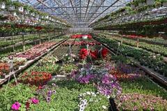 Mettez en place avec des fleurs de ressort et d'été en serre chaude à la lumière du soleil Configuration florale Photo libre de droits
