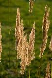 Mettez en place l'herbe Image libre de droits