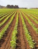 mettez en place l'irrigation Images stock