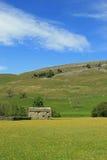 Mettez en place la grange dans le domaine jaune, Swaledale, Yorkshire Photo stock