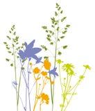 Mettez en place les fleurs, les herbes et les plantes, vecteur, tracé Image libre de droits