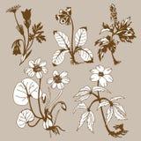 Mettez en place les flowerses illustration de vecteur