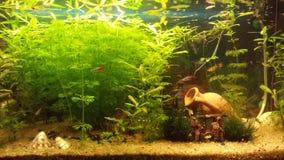 Meu acquarium Imagem de Stock