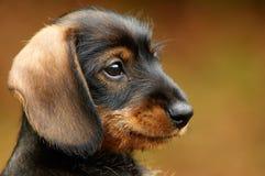 Meu amigo pequeno bonito Fotos de Stock Royalty Free