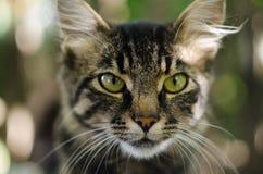 Meu animal de estimação favorito Foto de Stock Royalty Free