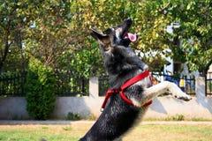 Meu cão Imagens de Stock