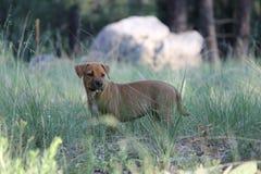 Meu cão 016 Fotos de Stock