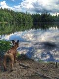 Meu cão Fotografia de Stock