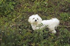 Meu cão Imagem de Stock