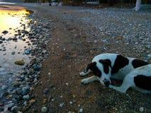 Meu cão Fotos de Stock