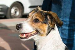 Meu cão após uma guarnição Imagem de Stock